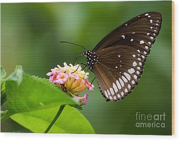 Wood Print featuring the photograph Butterfly by Fotosas Photography