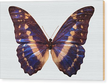 Butterfly Wood Print by John Foxx