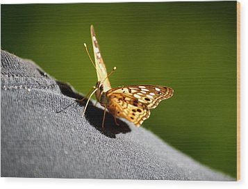 Butterfly Kisses Wood Print by Karen Scovill