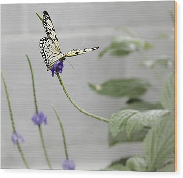 Wood Print featuring the photograph Butterfly by Nick Mares