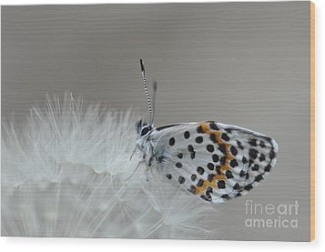 Butterfly Wood Print by Sylvie Leandre