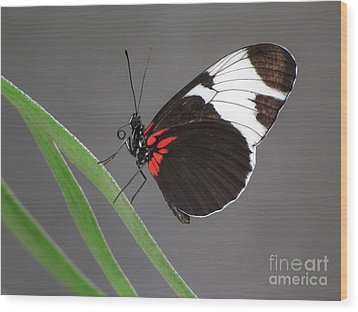 Wood Print featuring the photograph Butterfly  by Tam Ryan