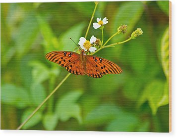 Butterfly Wood Print by Wild Expressions Photography
