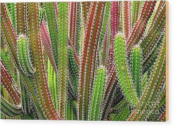 Wood Print featuring the photograph Cactus by Ranjini Kandasamy