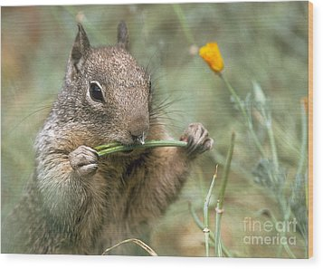 Wood Print featuring the photograph California Ground Squirrel by Doug Herr