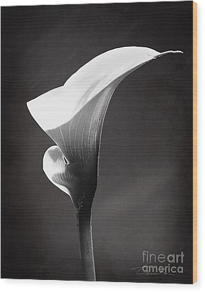 Calla Lily The Magnificent Beauty Wood Print