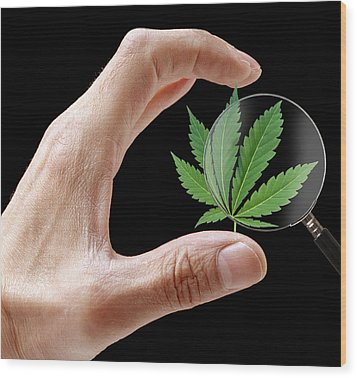 Cannabis Research Wood Print by Victor De Schwanberg