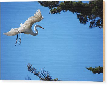 Carmel Egret Wood Print by Harvey Barrison