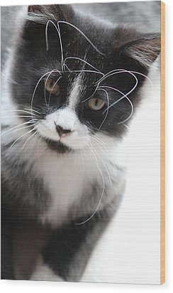 Cat In Chaotic Thought Wood Print