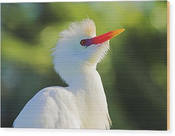 Wood Print featuring the photograph Cattle Egret-2-st Lucia by Chester Williams