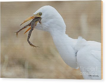 Cattle Egret With Dinner Wood Print