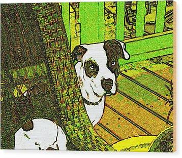 Charlie Bear Wood Print by Jann Paxton