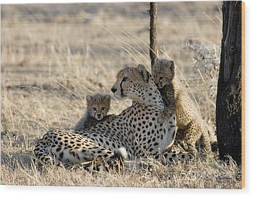 Cheetah Mother And Cubs Wood Print by Gregory G. Dimijian, M.D.