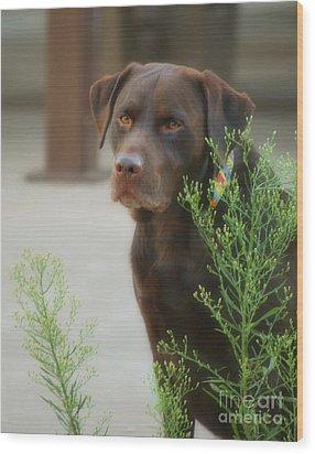 Chocolate Labrador - Womans Best Friend Wood Print by Donna Greene