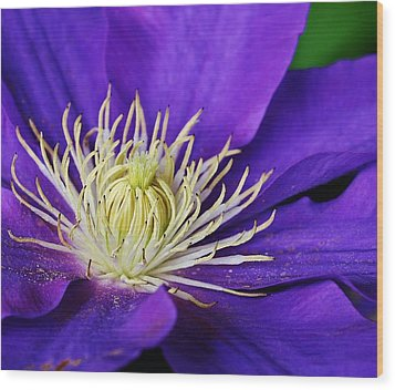 Clematis Close Up Wood Print by Bruce Bley