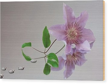 Wood Print featuring the photograph Clematis 'filigree' by Shirley Mitchell
