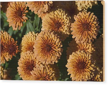 Close-up View Of Orange Mums In Bloom Wood Print by Todd Gipstein