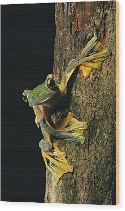 Close View Of A Wallaces Flying Frog Wood Print by Tim Laman