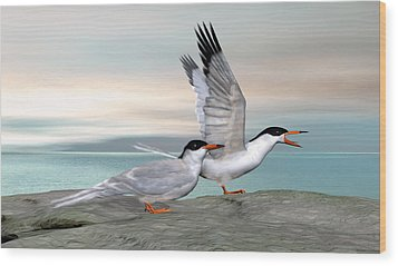 Common Tern Wood Print by Walter Colvin