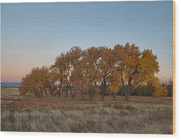 Wood Print featuring the photograph Cottonwood Grove by Monte Stevens
