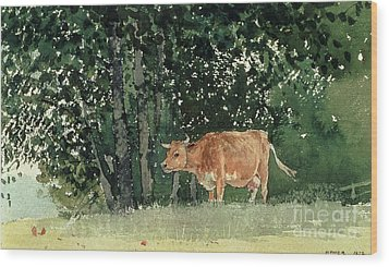 Cow In Pasture Wood Print