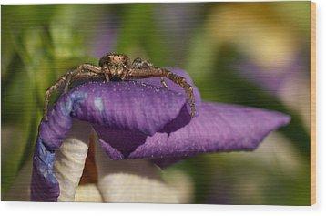 Crab Spider In A Violet Wood Print by Jouko Lehto