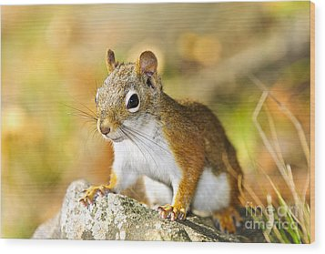 Cute Red Squirrel Closeup Wood Print