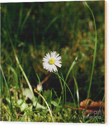 Daisy Daisy Wood Print by Isabella F Abbie Shores