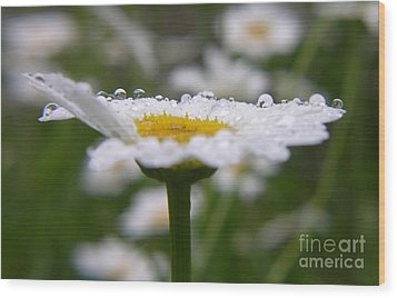 Daisy In The Rain Wood Print by Yumi Johnson