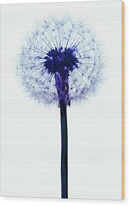 Dandelion Seed Head Wood Print by Victor De Schwanberg