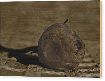 Wood Print featuring the photograph Dead Rosebud by Steve Purnell