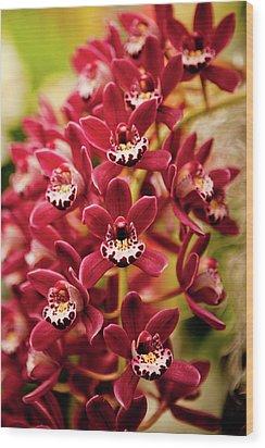 Deep Cut Orchid Society 15th Annual Orchid Show Wood Print by Dan Pfeffer