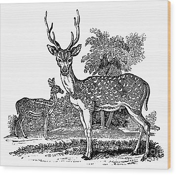 Deer Wood Print by Granger