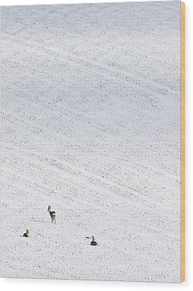 Deer In A Distant Snow Covered Field Wood Print by Adrian Bicker