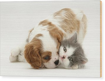 Dog And Cat Wood Print by Jane Burton