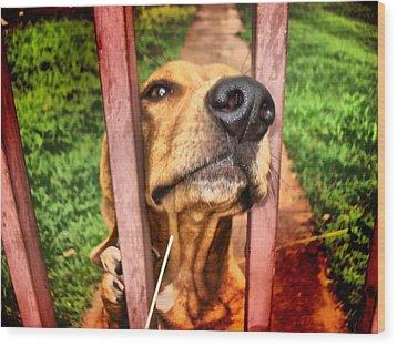 Wood Print featuring the digital art DOG by Beto Machado