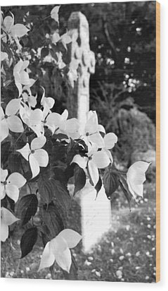 Dogwood In Cemetery Wood Print