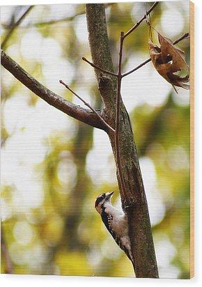 Downy Woodpecker Wood Print by Scott Hovind