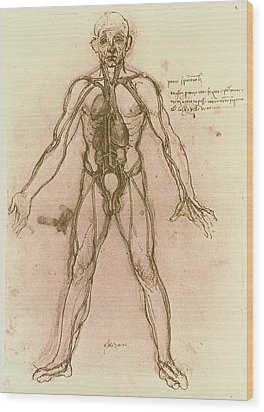 Drawing Of Human Venous System (leonardo Da Vinci) Wood Print by Mehau Kulyk