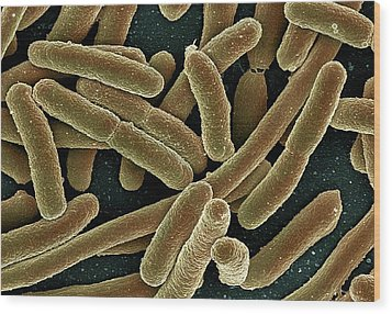E. Coli Bacteria, Sem Wood Print by Ami Images