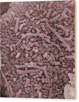 E. Coli Bacteria, Sem Wood Print by Steve Gschmeissner