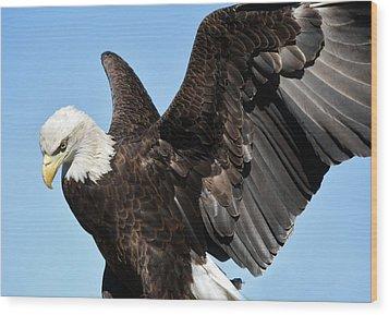 Eagle Wood Print by Paulette Thomas