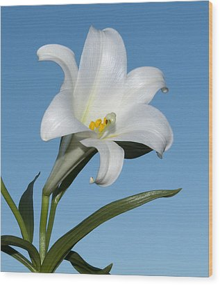 Easter Lily Wood Print by George Hawkins