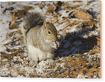 Eastern Gray Squirrel Sciurus Wood Print by Tim Laman