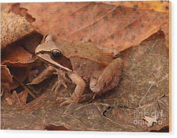 Eastern Wood Frog Wood Print by Ted Kinsman