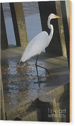 Egret Wood Print by Gordon Mooneyhan