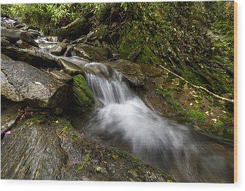 Enchanted Forest Wood Print by Debra and Dave Vanderlaan
