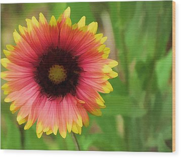Wood Print featuring the photograph Enough Of The Flowers by John Crothers