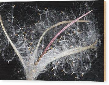 Epilobium Angustifolium Seeds Wood Print by Dr Keith Wheeler