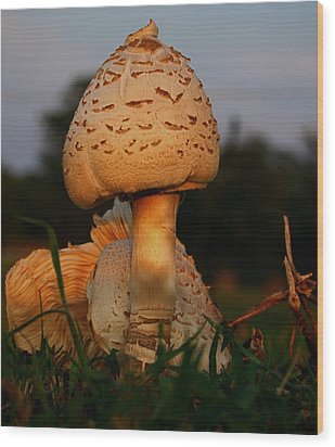 Evening Mushroom Wood Print by Karen Harrison